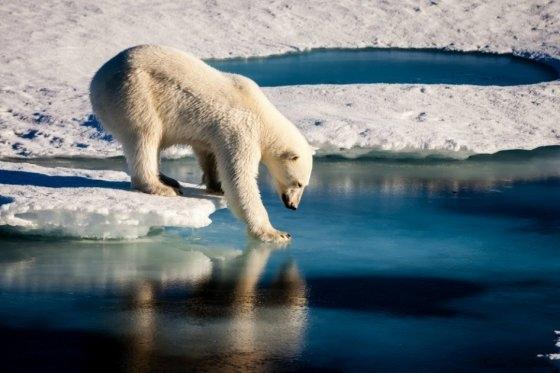transformacion de los ecosistemas por el cambio climatico 5