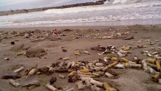 colillas de cigarro contaminan el mar mas que popotes 3