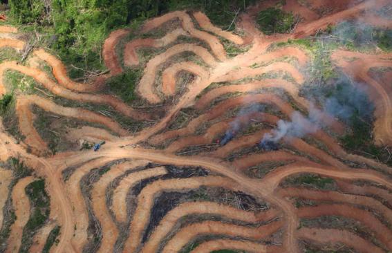 transformacion de los ecosistemas por el cambio climatico 3