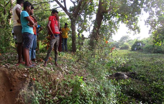 investigan muerte de elefantes salvajes en sri lanka 2
