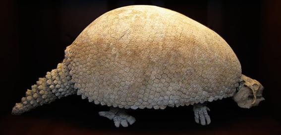 hallan restos de gliptodonte que vivio durante la era del hielo 1