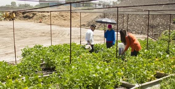 unam crea suelos artificiales 2