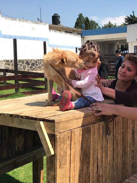 perros damnificados por el sismo del 19 de septiembre 1