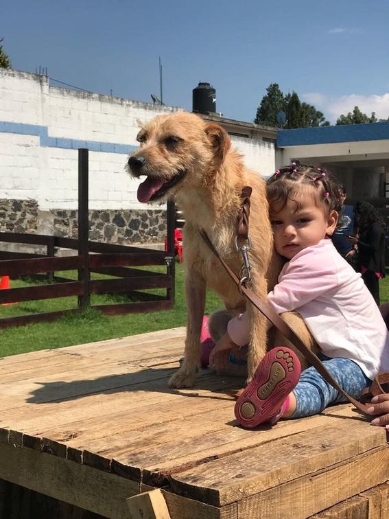 perros damnificados por el sismo del 19 de septiembre 2