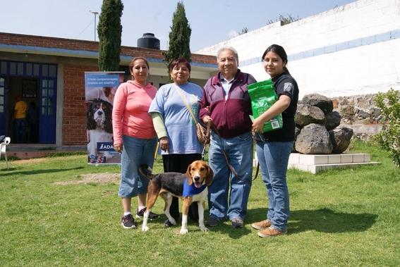 perros damnificados por el sismo del 19 de septiembre 4