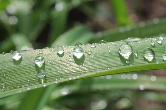 la razon por la que podemos oler la lluvia 2
