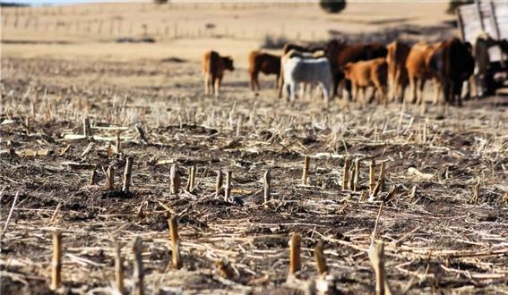 como afecta el cambio climatico al hambre 4