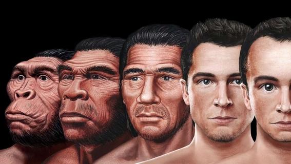 evolucion del rostro humano 2