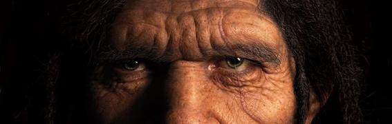 evolucion del rostro humano 1
