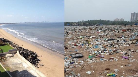 la playa que paso de ser un basurero a un hogar de tortugas 1