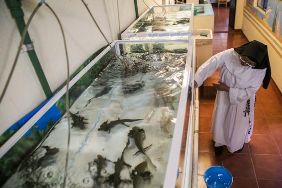 monjas mexicanas salvan al primo del ajolote achoque 2