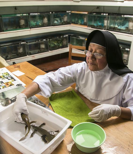 monjas mexicanas salvan al primo del ajolote achoque 4