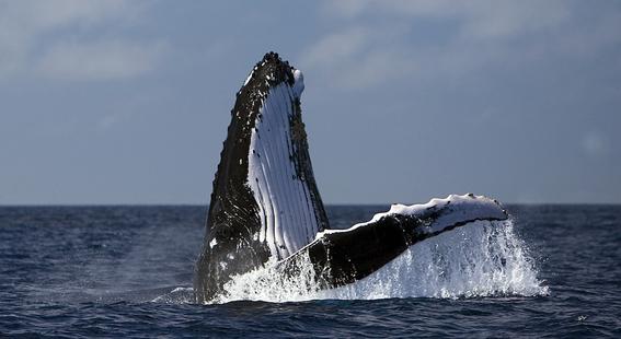 aprueban propuesta para proteger a las ballenas 2