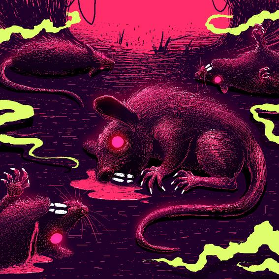 la rata gigante de la merced 2