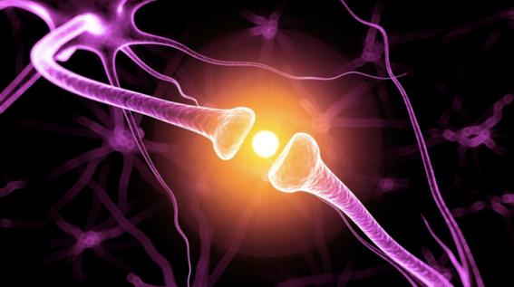 crean metodo para rastrear dopamina en cerebro 1