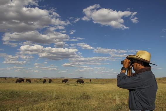 conservacion de los bisontes por la frontera entre mexico y eua 3