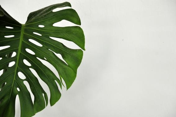un estudio demuestra que las plantas sienten dolor 3