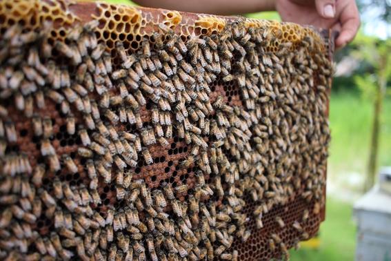 plagas y deforestacion acaban con habitat de abejas yucatan 2