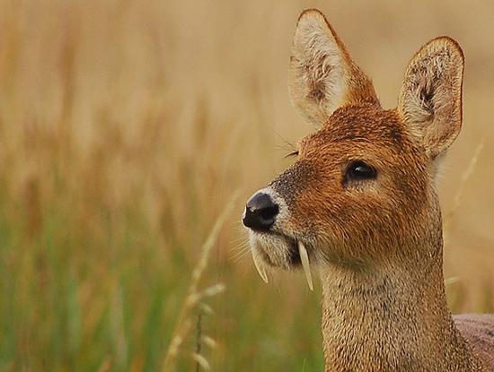 animales exoticos fotografias del top 20 3