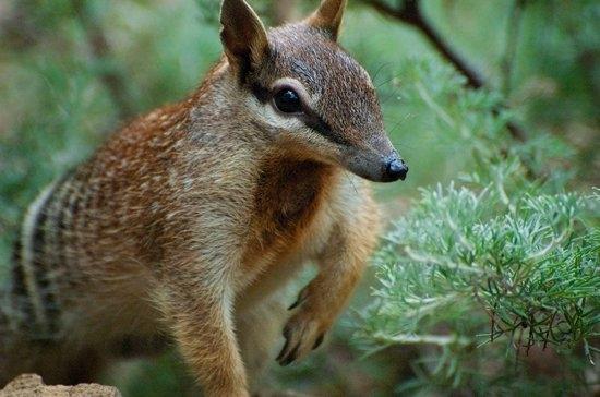 animales exoticos fotografias del top 20 12
