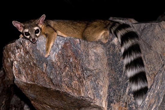 animales exoticos fotografias del top 20 13