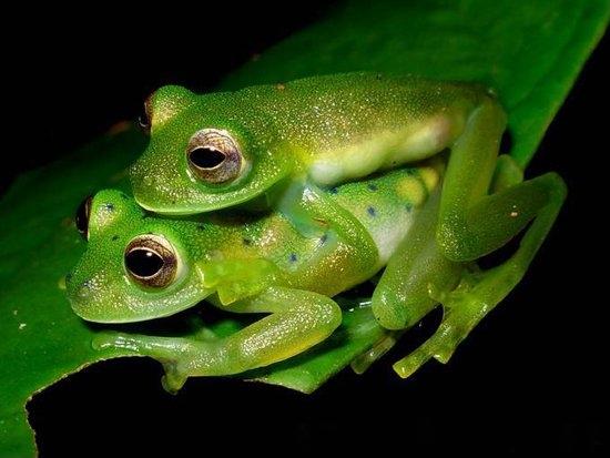 animales exoticos fotografias del top 20 21