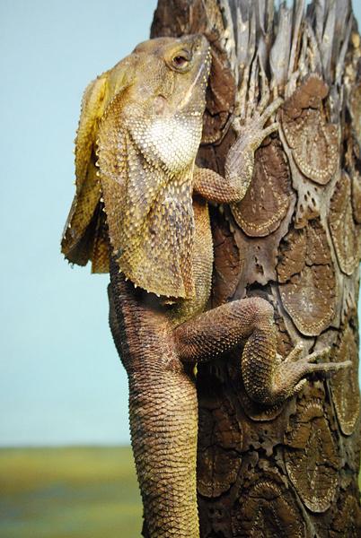 animales exoticos fotografias del top 20 26