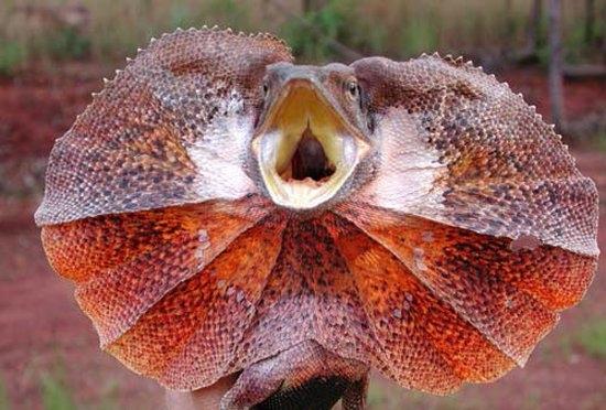 animales exoticos fotografias del top 20 27