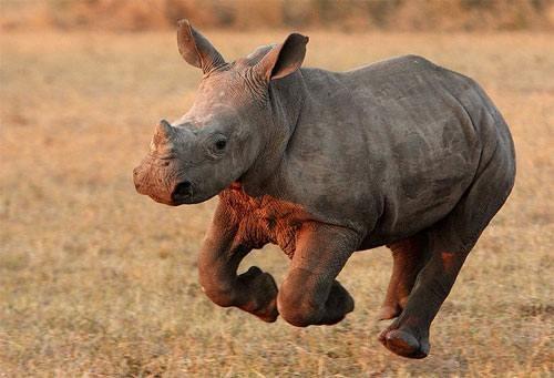 liberan a traficante de rinocerontes en sudafrica 1