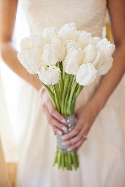 significado de los tulipanes 2