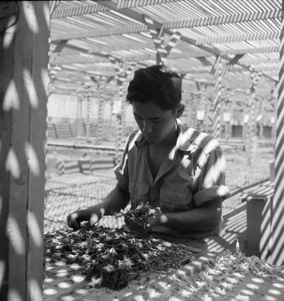 fotos campos de concentracion japoneses en estados unidos 21
