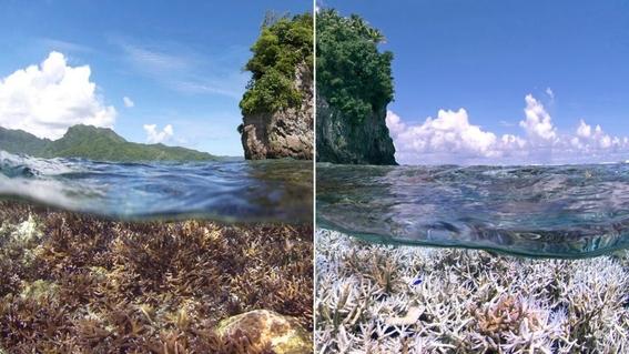 cambio climatico modifica la composicion de los arrecifes 5