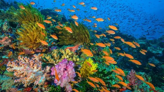 cambio climatico modifica la composicion de los arrecifes 1