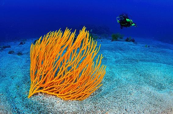 cambio climatico modifica la composicion de los arrecifes 2