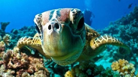 cambio climatico modifica la composicion de los arrecifes 4