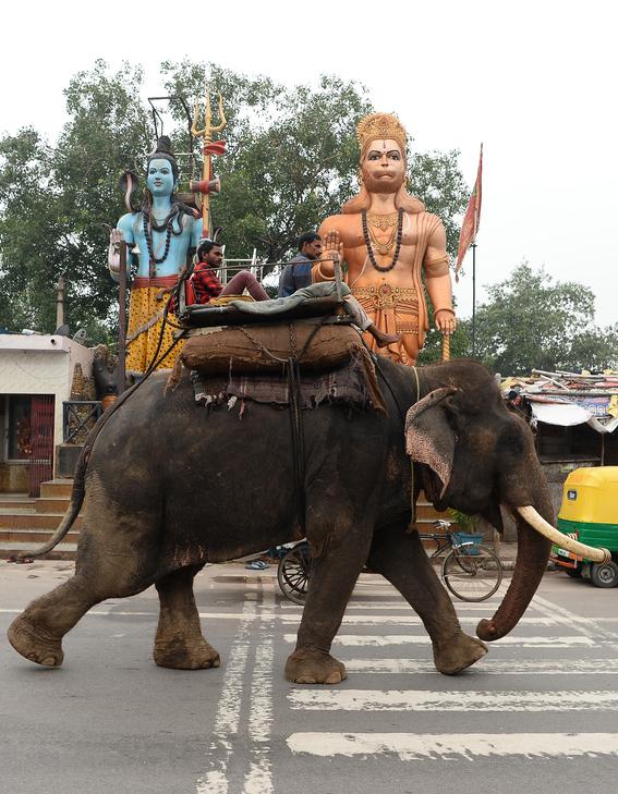 ultimos elefantes de nueva delhi son obligados a salir de las calles 1