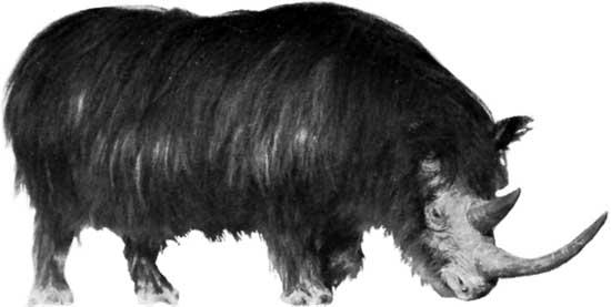 ocho cosas que tienes que saber sobre rinocerontes 2