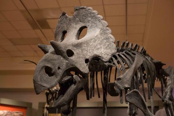 encuentran nueva especie de dinosaurio en mexico 1