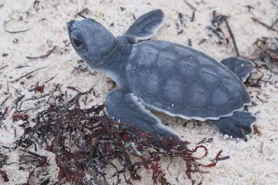 convierten playa de oaxaca mexico en santuario de tortugas marinas 1