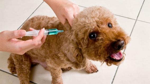 vacunas gratis a perros y gatos en semana nacional de reforzamiento de vacunacion 1