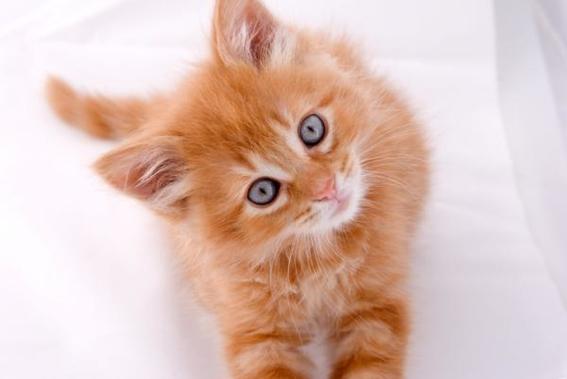 vacunas gratis a perros y gatos en semana nacional de reforzamiento de vacunacion 3