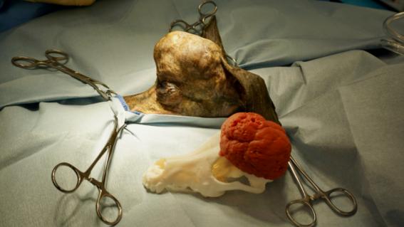 veterinarios usan impresion 3d para salvar a perra con cancer 5