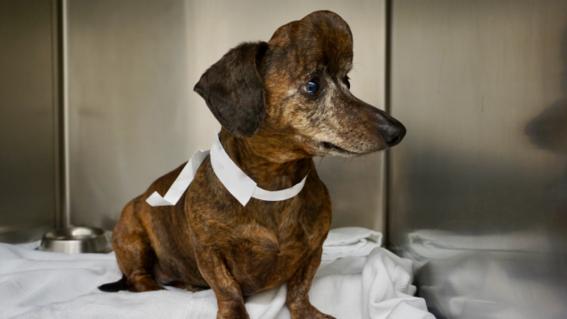 veterinarios usan impresion 3d para salvar a perra con cancer 2