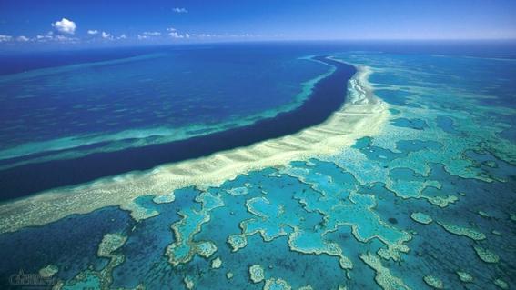 cientificos buscan salvar gran barrera de coral con electricidad 1