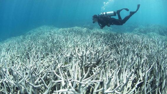 cientificos buscan salvar gran barrera de coral con electricidad 3