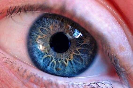 cerebro se asegura de que la vision continue cuando parpadeamos 2