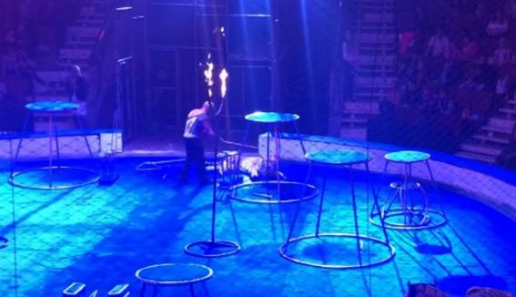 tigre convulsiona en circo ruso y le tiran agua encima 2