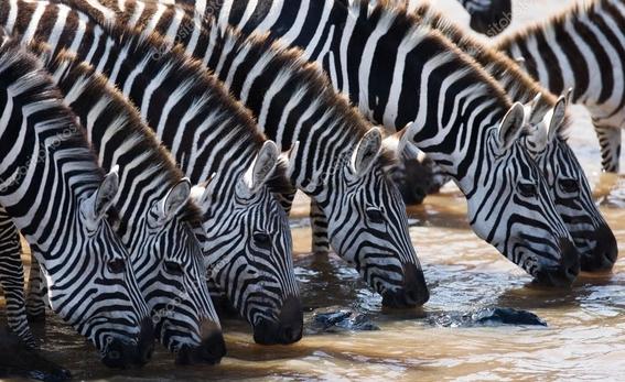 la desaparicion de selvas nos dejara sin agua 1