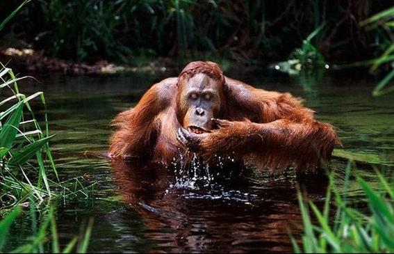 la desaparicion de selvas nos dejara sin agua 3