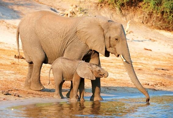 la desaparicion de selvas nos dejara sin agua 4